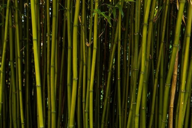 Sfondo di bambù fresco