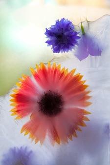 Sfondo di centaurea, camomilla, fiore campana nel cubo di ghiaccio con bolle d'aria.