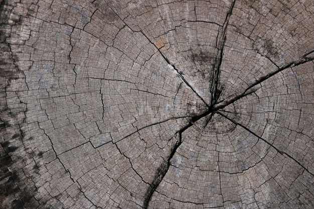 Sfondo di ceppo di albero