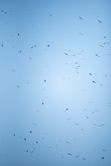 Sfondo di cielo e falco