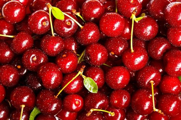 Sfondo di ciliegie mature. messa a fuoco selettiva frutta estiva.