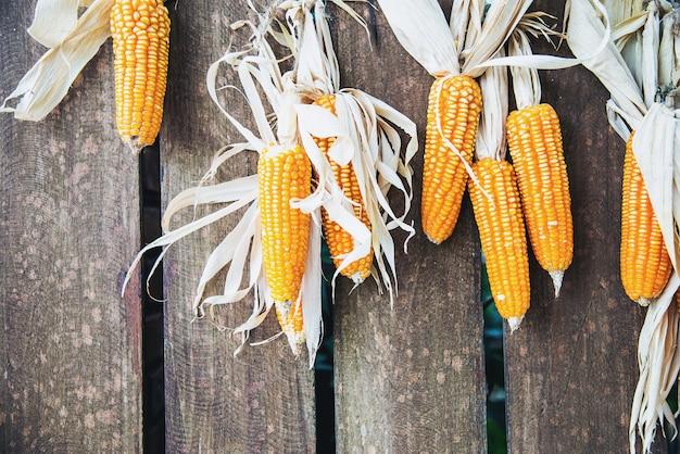Sfondo di decorazione di mais secco