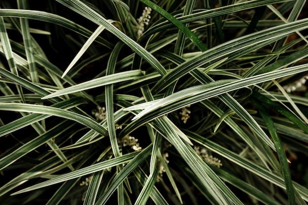 Sfondo di erba e foglie
