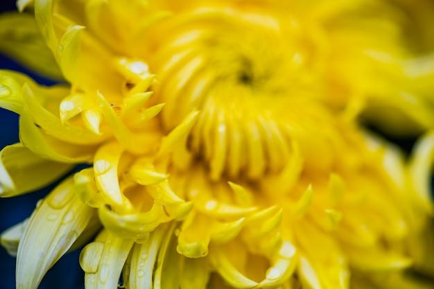 Sfondo di fiori autunnali