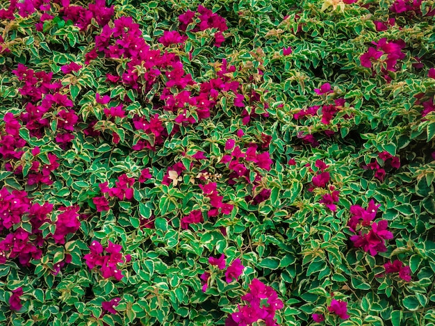 Sfondo di fiori rosa verde. sfondo della natura