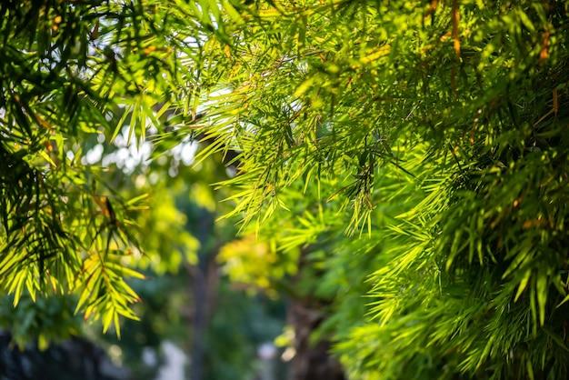 Sfondo di foglie di bambù