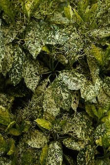 Sfondo di foglie di gren