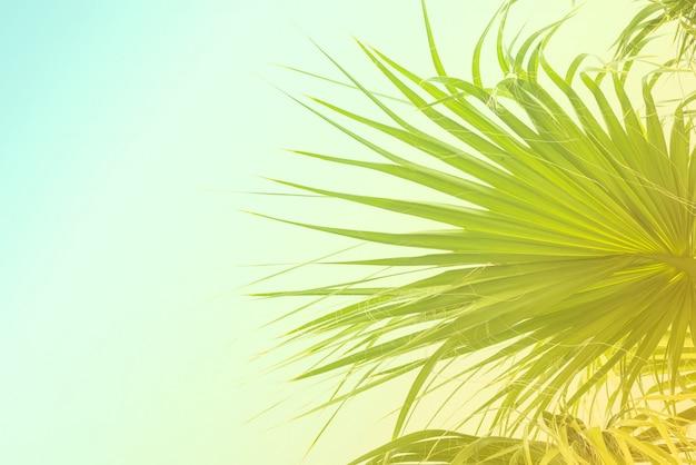 Sfondo di foglie di palma con luce solare