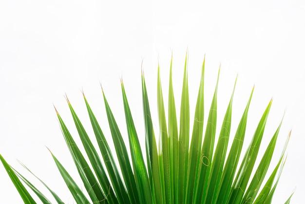Sfondo di foglie di palma