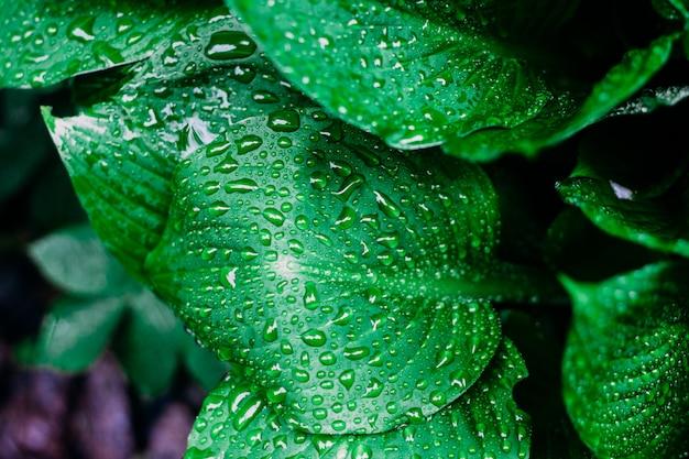 Sfondo di foglie fresche con gocce d'acqua