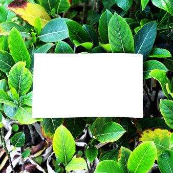 Sfondo di foglie giardino natura