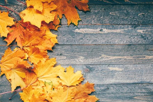 Sfondo di foglie luminose d'autunno