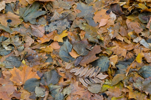 Sfondo di foglie marce d'autunno