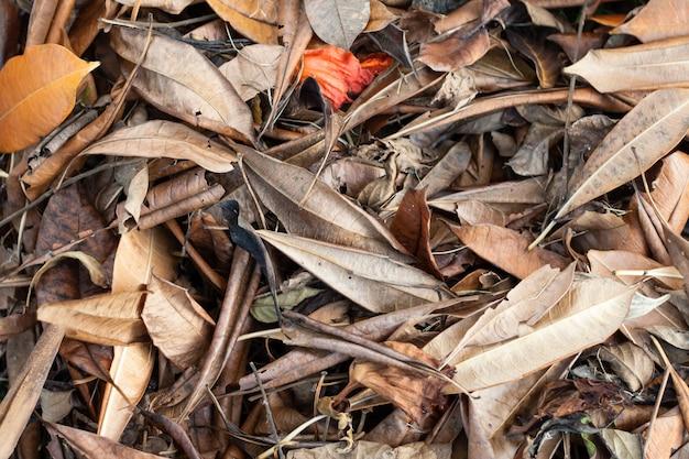 Sfondo di foglie secche