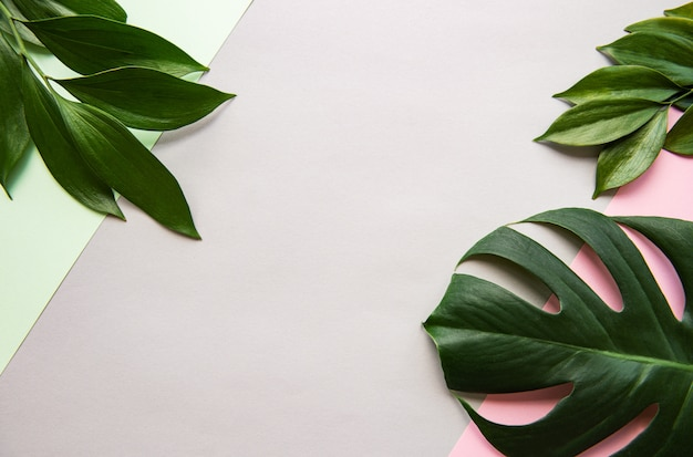 Sfondo di foglie tropicali e foglia di monstera