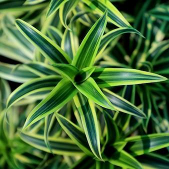 Sfondo di foglie verdi di natura