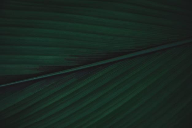 Sfondo di foglie verdi distesi. natura sfondo tono verde scuro
