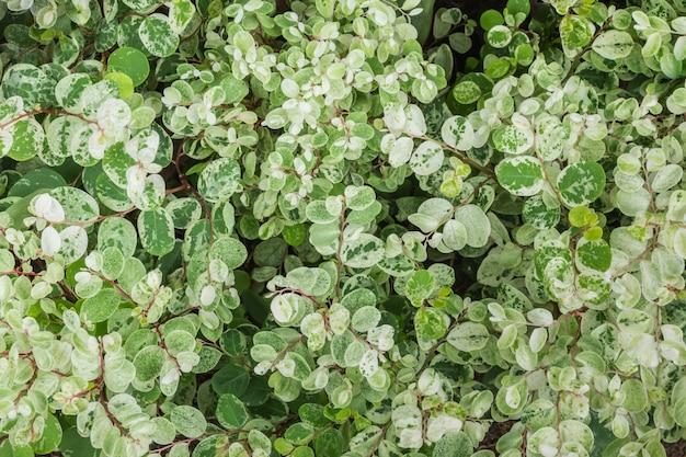 Sfondo di foglie verdi minuscole