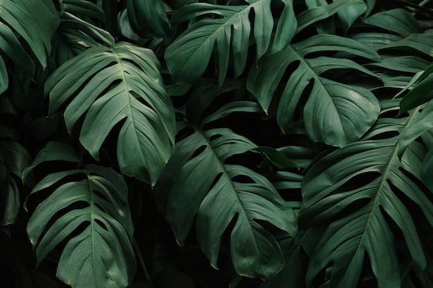 Sfondo di foglie verdi tropicali