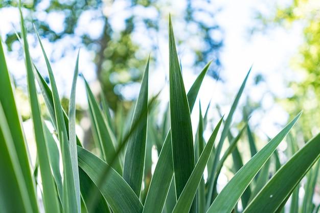 Sfondo di foglie verdi,