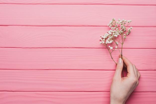 Sfondo di legno rosa con mano che tiene un ramoscello