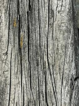 Sfondo di legno stagionato, primo piano. vecchia struttura in legno