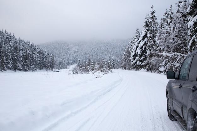 Sfondo di natale con abeti innevati, bellissimo paesaggio montano invernale