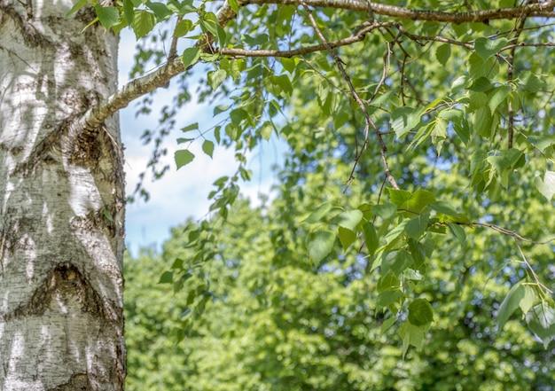 Sfondo di natura con foglie verdi sui rami