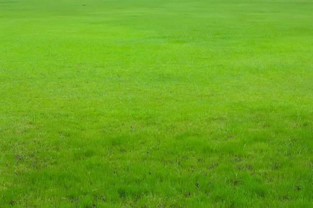 Sfondo di natura verde erba.
