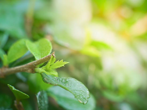 Sfondo di natura verde erba