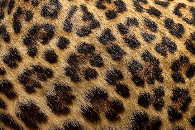 Sfondo di pelliccia di leopardo.