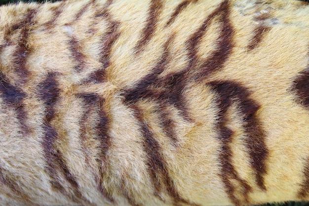 Sfondo di pelliccia di tigre