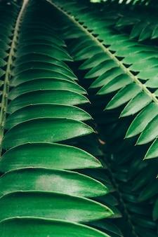 Sfondo di piante della giungla. boschetti e cespugli tropicali nella giungla.