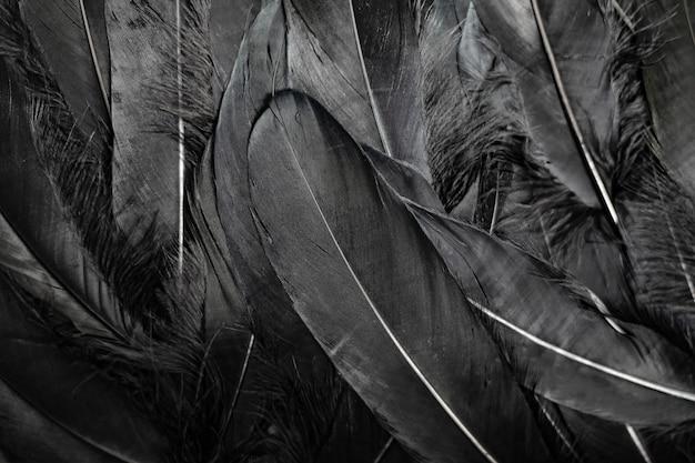Sfondo di piume nere