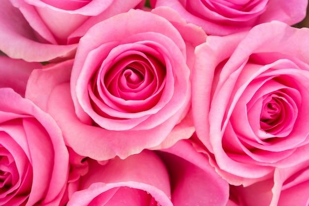 Sfondo di rose rosa