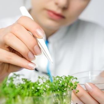 Sfondo di salute e sicurezza con germogli di insalata di crescione