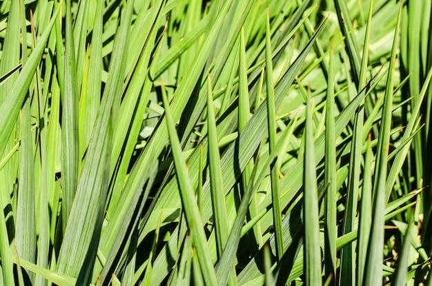Sfondo di un verde erba fresca.
