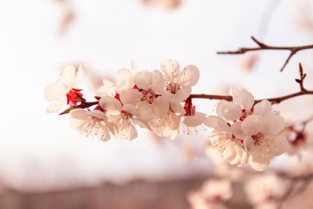 Sfondo fiore astratto. fiori realizzati con filtri colorati