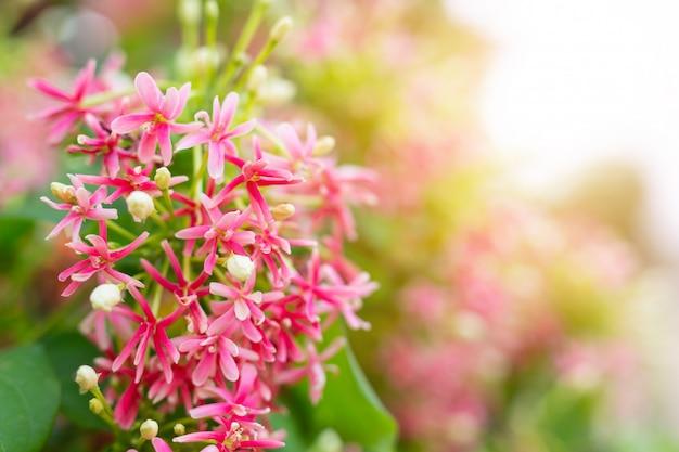 Sfondo fiore rosso