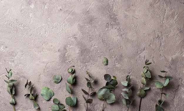 Sfondo floreale con foglie di eucalipto