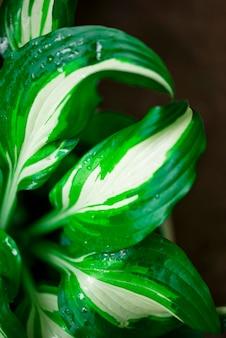 Sfondo floreale con foglie verdi