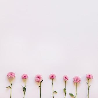 Sfondo floreale con sette fiori rosa sul fondo