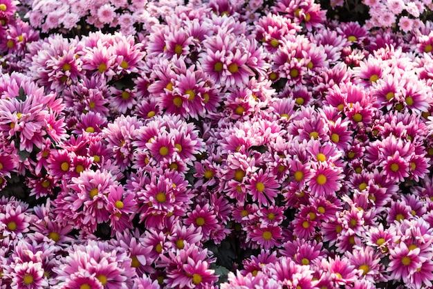 Sfondo floreale lotto fiori rosa