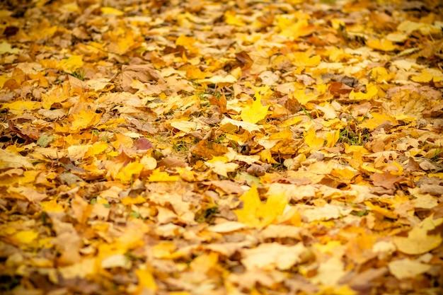 Sfondo gruppo autunno foglie d'arancio. outdoor.autumn lascia la priorità bassa.