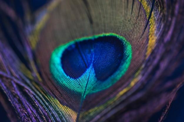 Sfondo luminoso il modello di una piuma di pavone