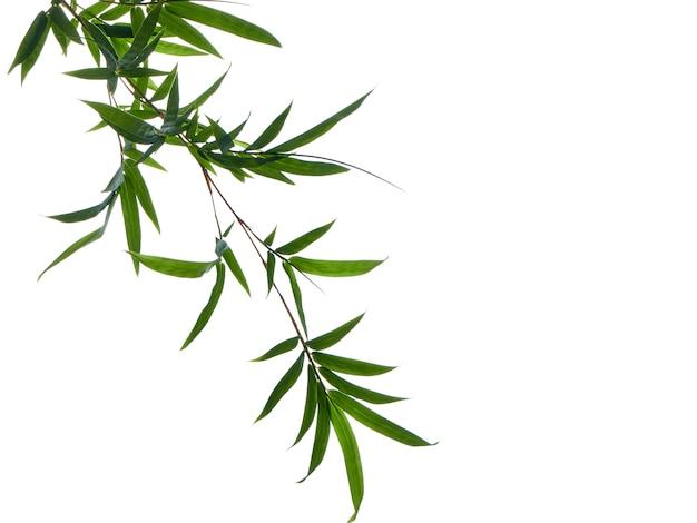 Sfondo naturale asiatico con bambù
