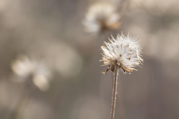 Sfondo naturale dai fiori di erba