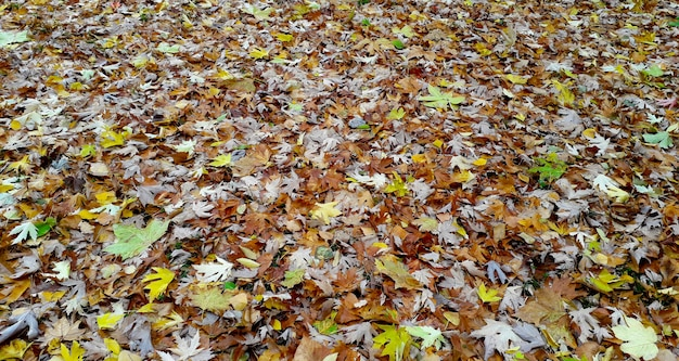 Sfondo naturale delle foglie di molti colori sul pavimento del parco