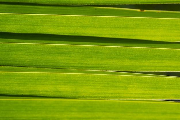 Sfondo naturale delle foglie verdi, struttura della foglia, foglie