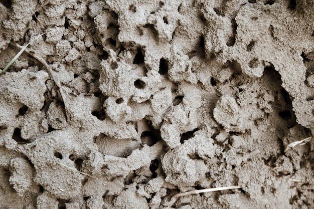 Sfondo naturale di formicaio in una sabbia